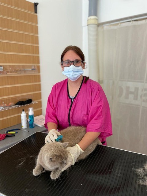Foundation Course at the Cat Grooming School