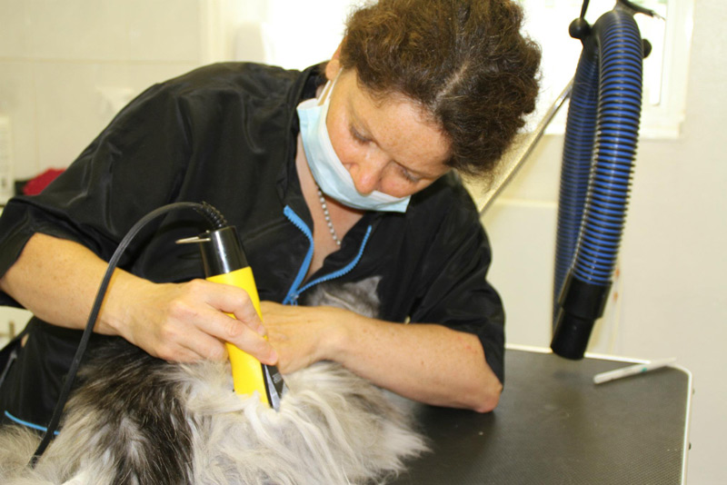 Advanced Course - Learning Cat Clipping